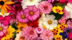 flowers-3644676_1920