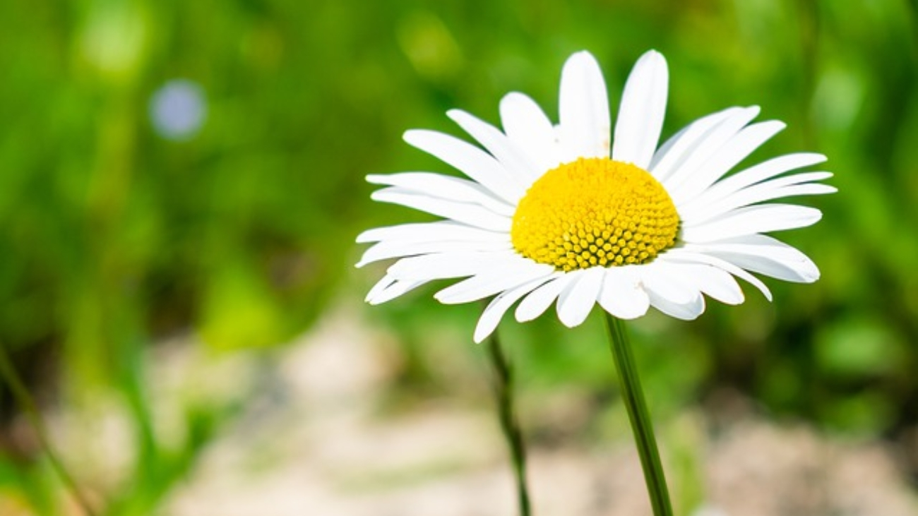 Hans-Christian-Andersen-Polny-kwiatek-Czyta-TataMariusz